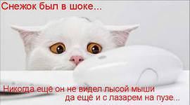 Чтобы кошка не съела, подключи беспроводную мышь