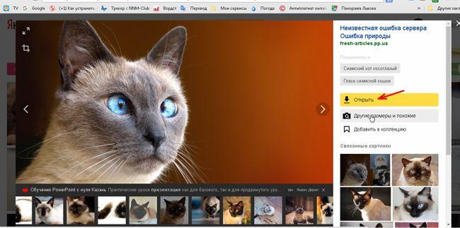 Как скачать картинку с сервиса яндекс картинки