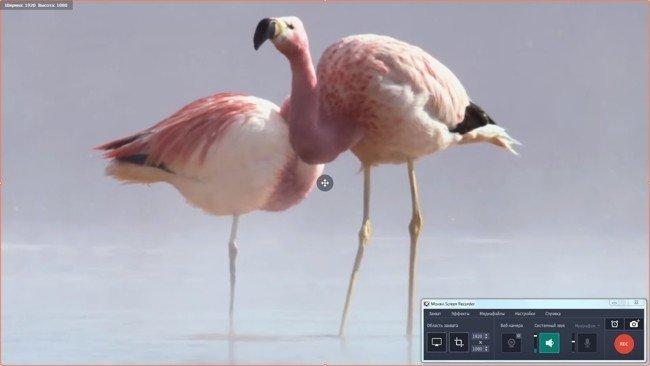 Как записать онлайн-видео в Movavi Screen Recorder