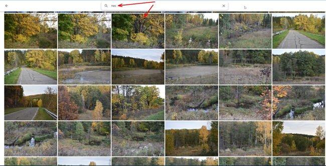Откроется страница со всеми фотографиями, где присутствует изображение леса.